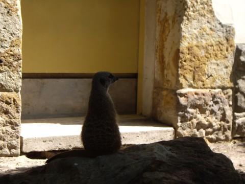 állatkert2.jpg