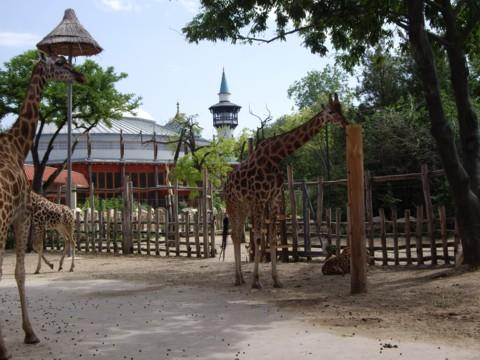 állatkert5.jpg