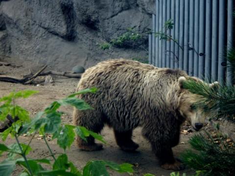 állatkert7.jpg