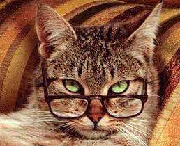 szemüvges macskosz.jpg