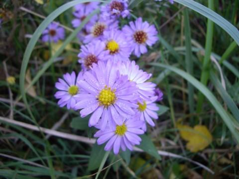 virág4.jpg