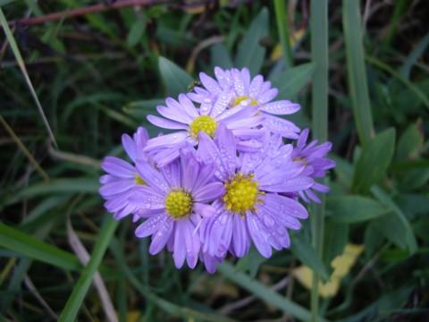 virág5.jpg