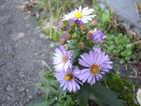 virág6.jpg