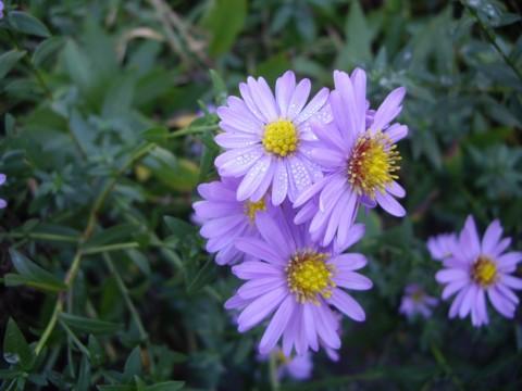 virág7.jpg