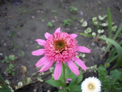 virág8.jpg