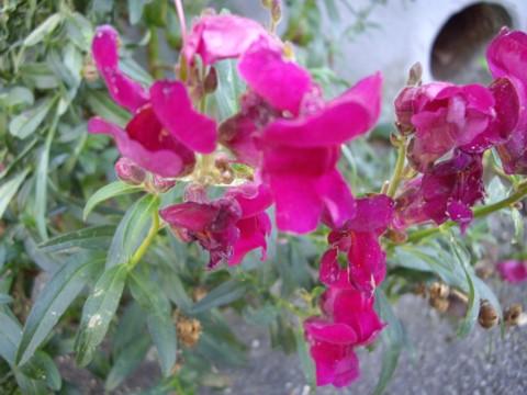 virág9.jpg