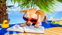 Miért olyan fontos, hogy sokat olvass?