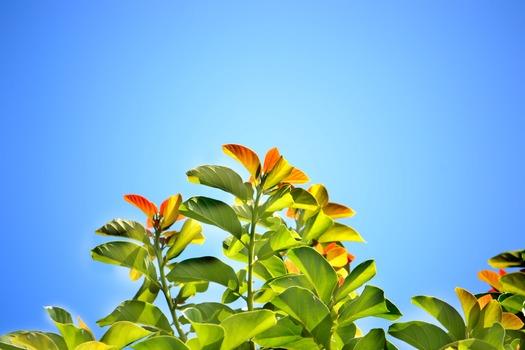 leaves-blue-sky-summer-bright-day-60696-medium.jpeg