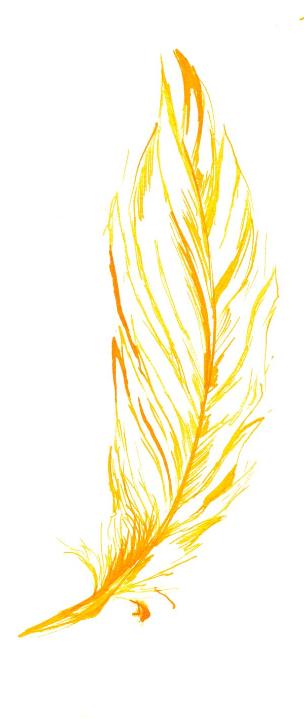 yellow_feather_by_thalo_ryder.jpg