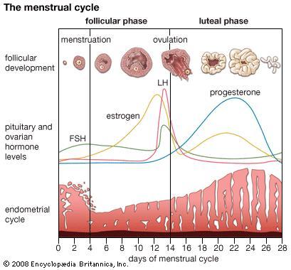 mens_ciclus.jpg