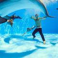 A delfin csak egy kanos emlős