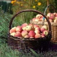 Ingyen alma kapható a Balatonnál