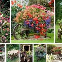Régi talicskából virágoskert