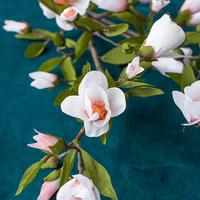 Virágzó magnóliaág papírból