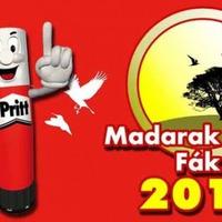 Madarak és Fák Napja Pályázat 2012.