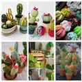 Kaktuszpajtik bevetésen