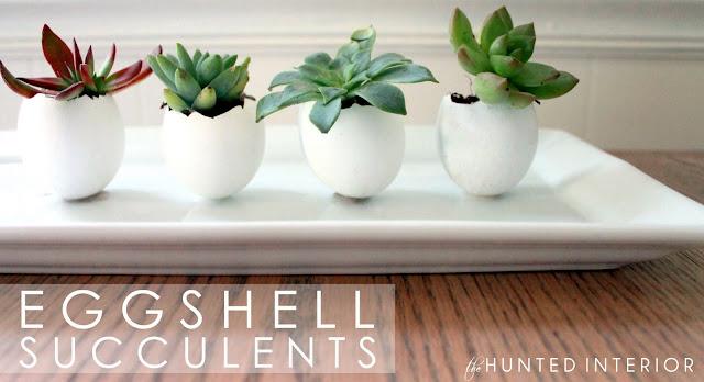 eggshell-succulent.jpg
