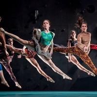 A professzionális táncosok közel 90 százaléka hoppon maradhat