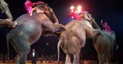 Megtorpanás után fellendülés - Merre tart a magyar cirkusz?