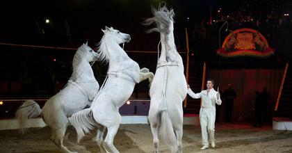 Hungarikummá minősítik a magyar cirkuszi lovas akrobatikát