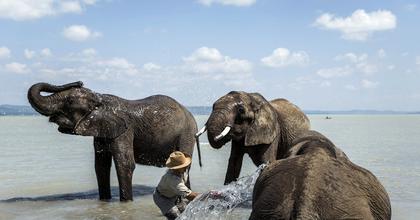 Elefántok is fürdenek majd a Balatonban - Jön a Cirkuszok Éjszakája
