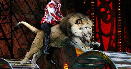 Betiltották a vadállatok szerepeltetését a holland cirkuszokban