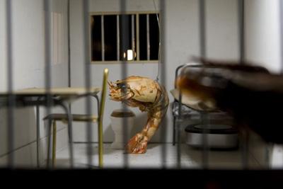 Hotel_Modern_Shrimp_Tales_5_foto_Leo_van_Velzen