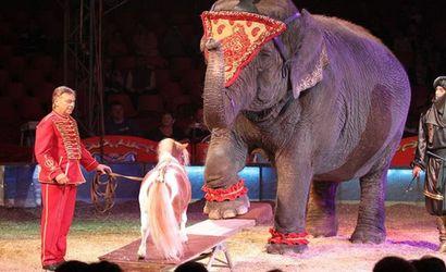 nemzetkozi-cirkuszfesztival-budapest