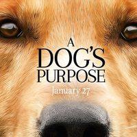 Egy kutya négy élete Szinkronos Online Film Magyarul