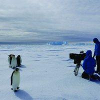 Pingvinek vándorlása 2 Szinkronos Online Film Magyarul