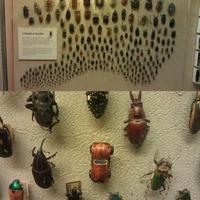 Pin Bug