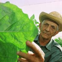 Alejandro Robaina - Castróval is dacolt a kubai dohány ráncos keresztapja