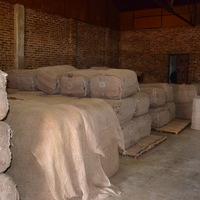 Ahol a Csoda megtörténik - Dohányérlelés egy kubai Szivargyárban