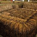 Fermentálás - A dohány erjesztése
