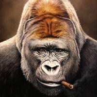 Cigarmonkeys - Szivarozó Majmok
