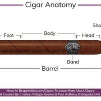 Cigar Anatomy