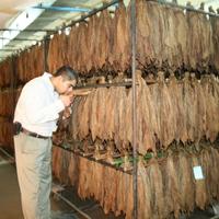 A kubai szivargyártás
