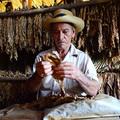 A kubai szivar hazája - a Viñales-völgy