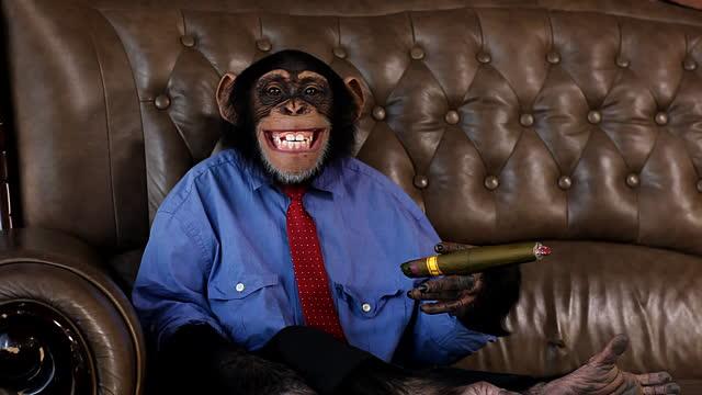 cigar_monkeys_cigar_test.jpg