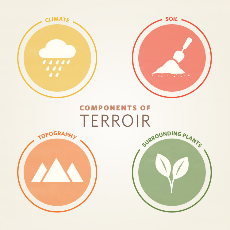 components-of-terroir.jpg