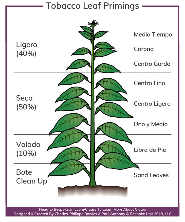 tobacco-leaf-primings.png