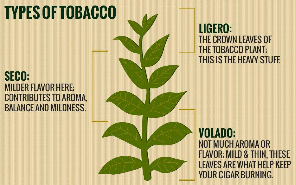 a_dohanylevelek_tipusai_---_types-of-tobacco.jpg