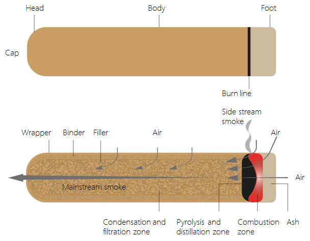anatomy-of-a-cigar.png