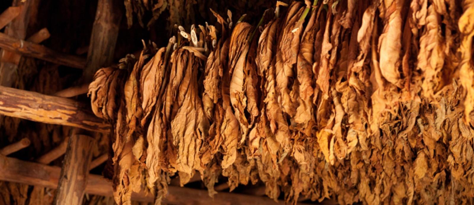 tabak-1600x692_1.jpg