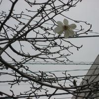 Yokosuka 1
