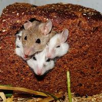 Az egerek már a spájzban vannak