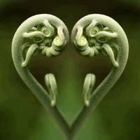 Amikor a szívbaj jön ránk - a pitvarfibrilláció