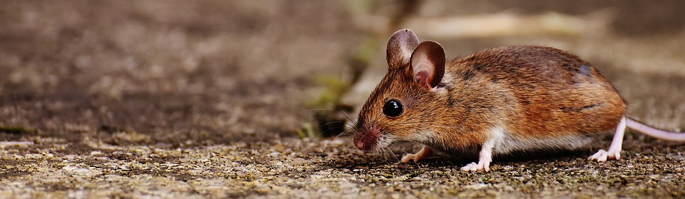 mouse-1708379_960_720.jpg