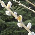 Barka és méhek