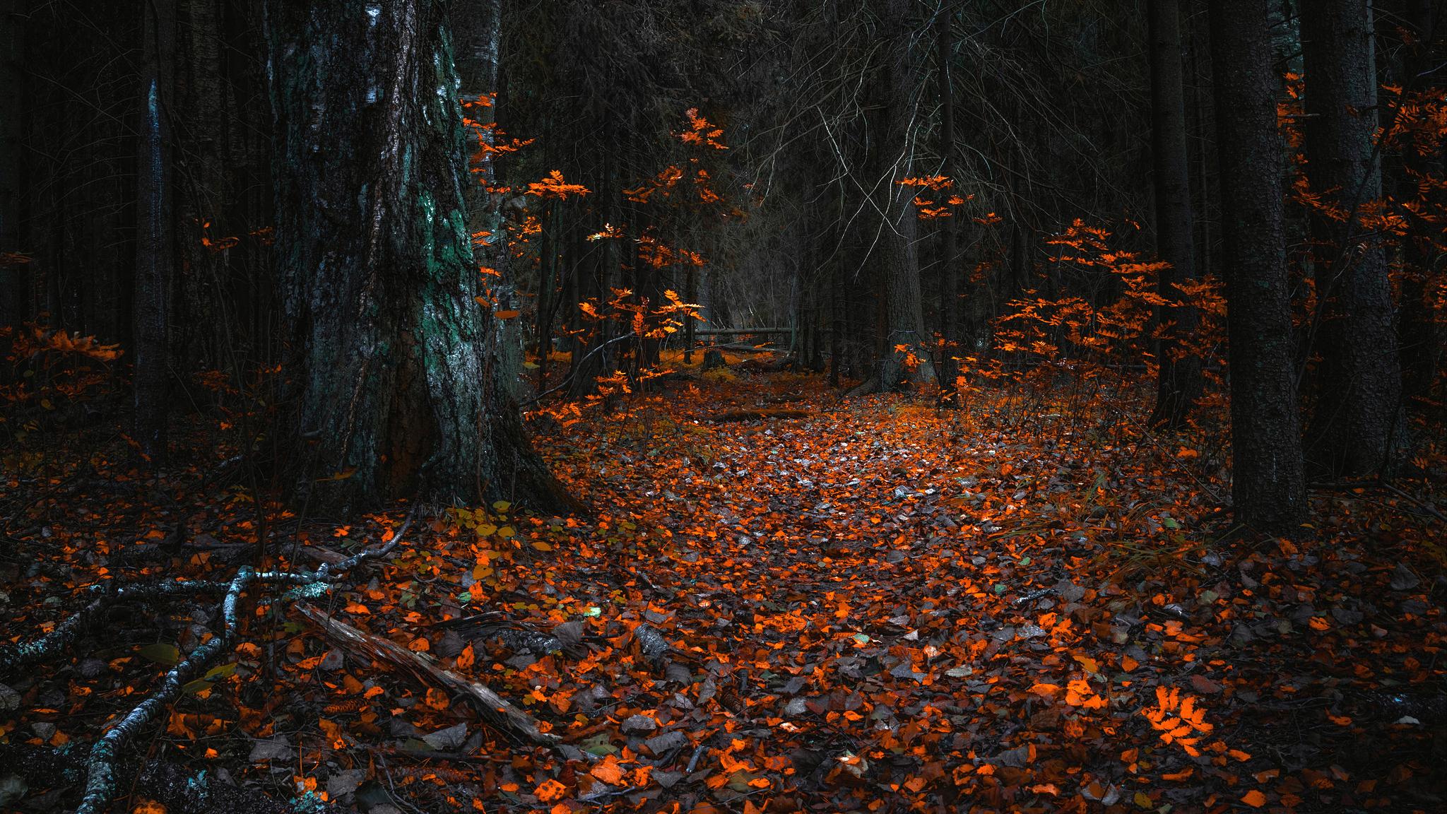 forest-fall-leaf-2048x1152.jpg